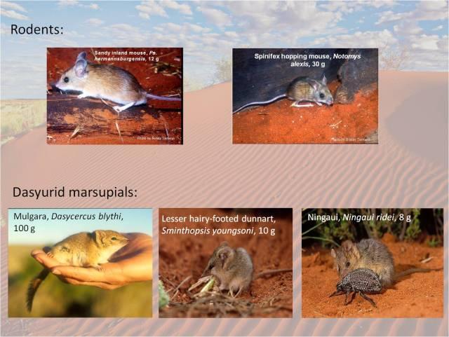 study species pic